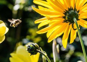 Forest Church Bee Friendly - Let's create a BUZZ @ St Mark's Church, Do, is