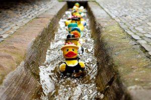 Duck Race 2029 @ Corless Mill Farm, Nr Dolphinholme